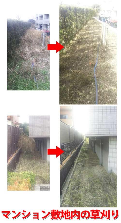 草刈り作業。敷地内の整備